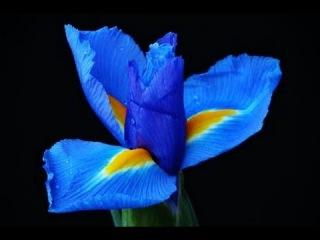 NATALIE DESSAY DELPHINE HAIDAN FLOWER DUET (LAKME) LEO DELIBES