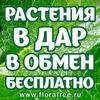 Растения в дар, в обмен, бесплатно! Florafree