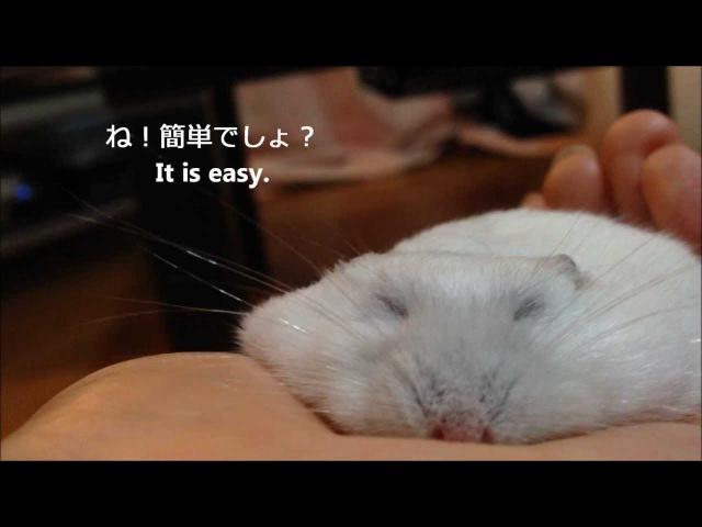 うす~いハムスターの作り方 How to make thin hamster