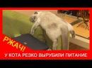★ Забавные кошки видео! Серый домашний кот прикольно уснул. Прикол с котом