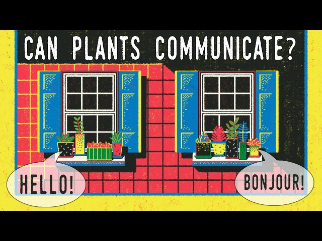 Can plants talk to each other Richard Karban