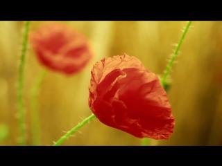 Как распускаются весенние цветы