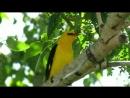 Ptici Razvivauschaya prezentaciya dlya detei Kartochki Domana