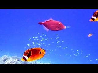 Подводное плавание.house reef snorkeling in vilamendhoo resort