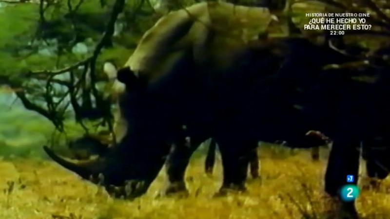 Grandes documentales El vuelo del Rinoceronte смотреть онлайн без регистрации