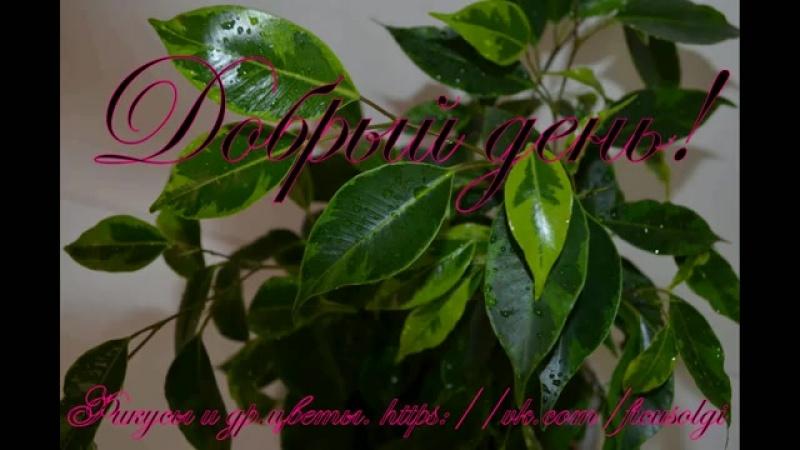 Обработка растений от клеща