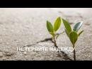 Совершил грех? Не теряй надежду Нуман Али Хан
