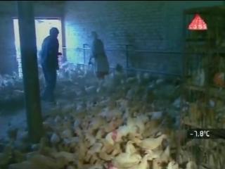 Александр Невзоров. СССР Товарный Дефицит. Видеохроника. (1989 - 1991.г.)