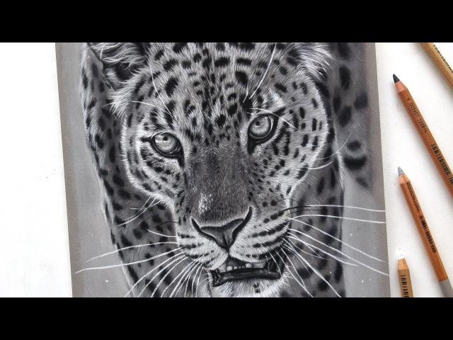 Realistic leopard drawing with pastel pencils Leontine van vliet