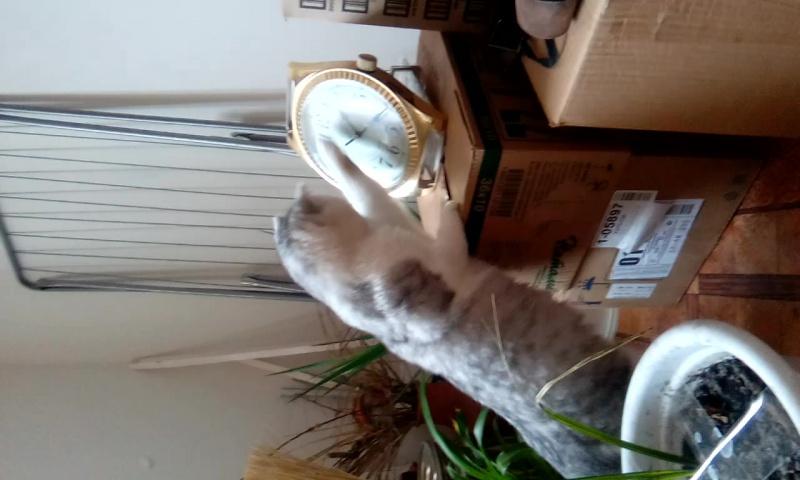 Наш кот)