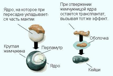 рис. Различие между формированием классических жемчужин и жемчужин кеши