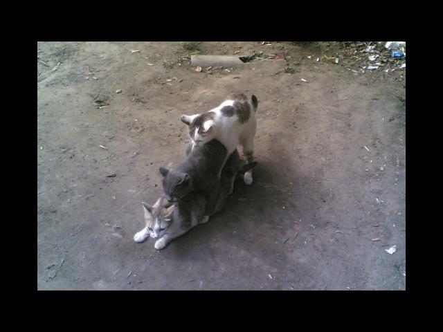 Веселые животные Тупят как люди Забавные моменты Прикольные животные