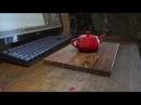 3D Camera Tracker SynthEyes совмещение живого видео и 3D графики
