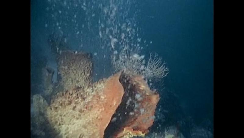 El mundo submarino de Jacques Cousteau Ep 34 El Misterio de los Arrecifes Ocultos
