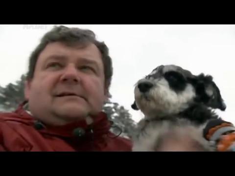 О породах: Мопс, пиренейская горная, котон де туеар, чихуа хуа, американская эскимоская собака.