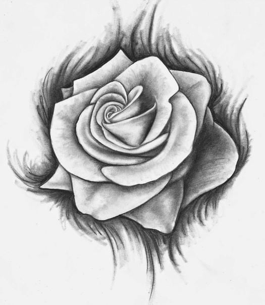 drawings of roses - 736×846