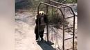 Медведица изкитайского зоопарка стала звездой Интернета Новости Первый канал