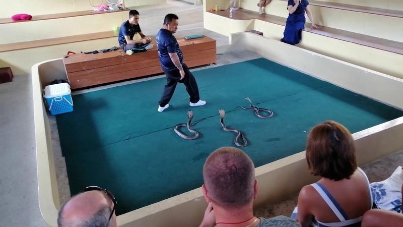 Отдых в Таиланде Обзор змеиной фермы и шоу Институт Луи Пастера