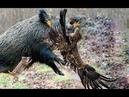 Đại bàng liệu có là sát thủ săn mồi khét tiếng nhất giới Mãnh thú không ?? Rắn , kỳ đà , tê giác