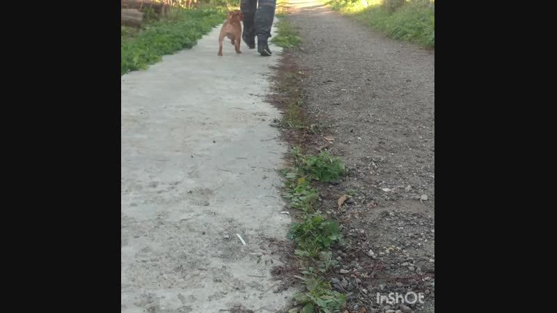 Юппи и её первая ринговка)