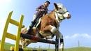 Kuh springt wie ein Pferd 10 sehr intelligente Tiere die dir den Verstand rauben werden