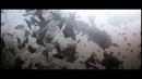Paol - From the underground un prieten edit