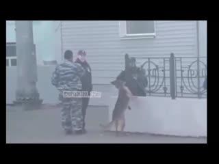 Полицейские Уссурийска издеваются над служебным псом