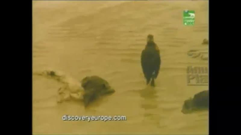 Проморолик канала Animal Planet 2000-2004 г. {6}