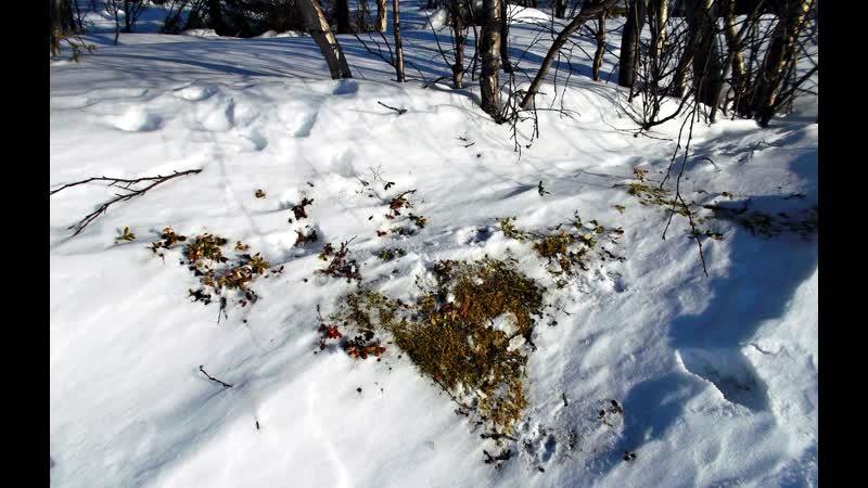 Зима КОРОЛЕВА БЕЛАЯ