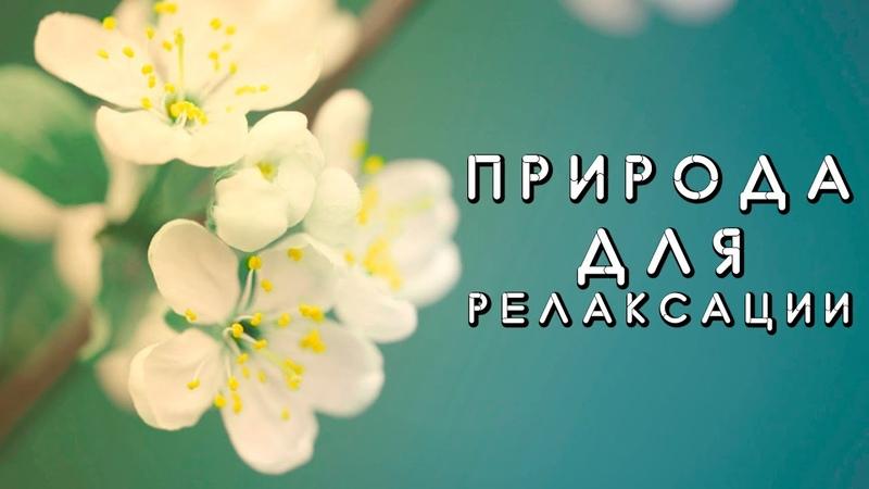 Красивая природа весной Макросъёмка Музыка для отдыха релаксации и медитации Снять стресс быстро