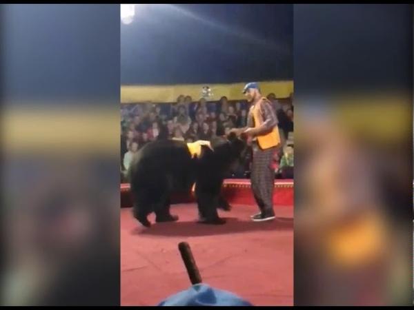 Скандальный цирк шапито гастролировал и в Коряжме