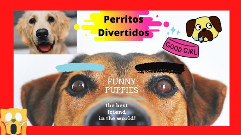 💖💖 PERROS mas GRACIOSOS Del Mundo CUTE Baby Animals DOGS Vídeos DIVERTIDOS DE PERROS 🤣🤣🤣 1
