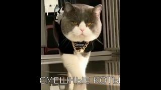 Смешные коты и кошки с озвучкой. Приколы 2020.