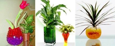 Как высаживать комнатные растения в гидрогель