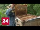 Пчелы гибнут за капитал кто ответит за бесконтрольную травлю насекомых Россия 24