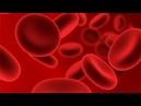 Самая непознанная часть человеческого тела.Крвь.Необычные качества кров.и.Под грифом СЕКРЕТНО