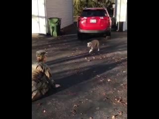 Собачка сначала не узнает свою хозяйку, которая вернулась домой спустя 5 лет, а потом узнает!