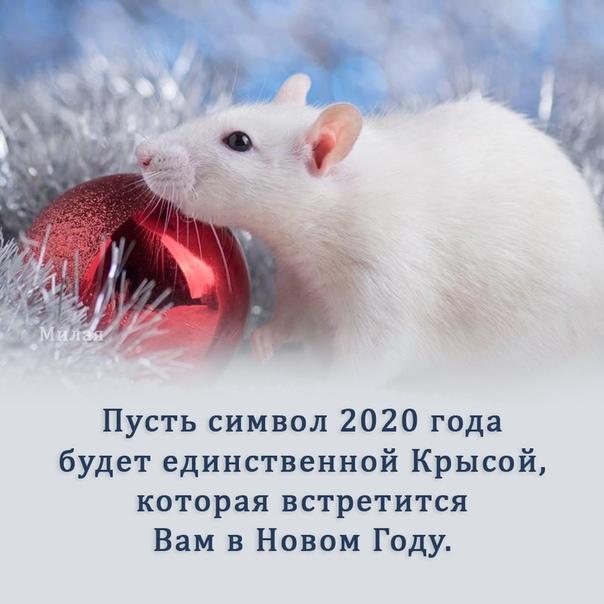 милые поздравления с годом крысы открытой