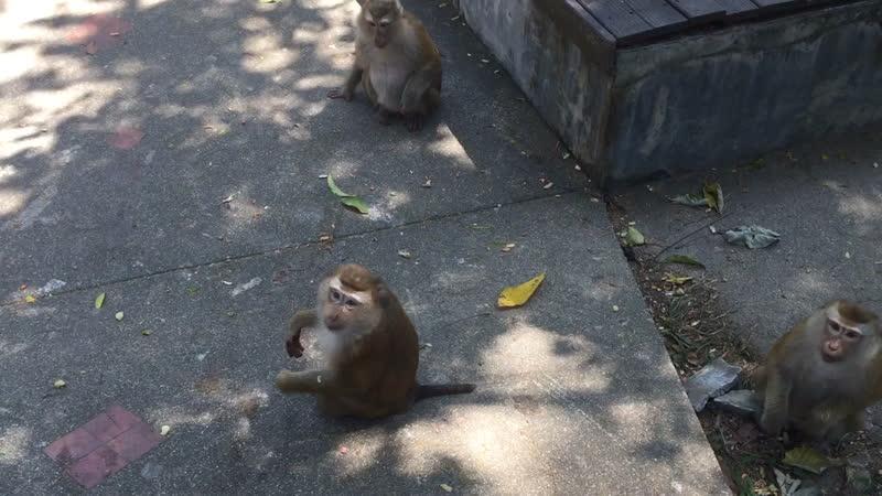 Кормлю обезьян 🐵😀🇹🇭