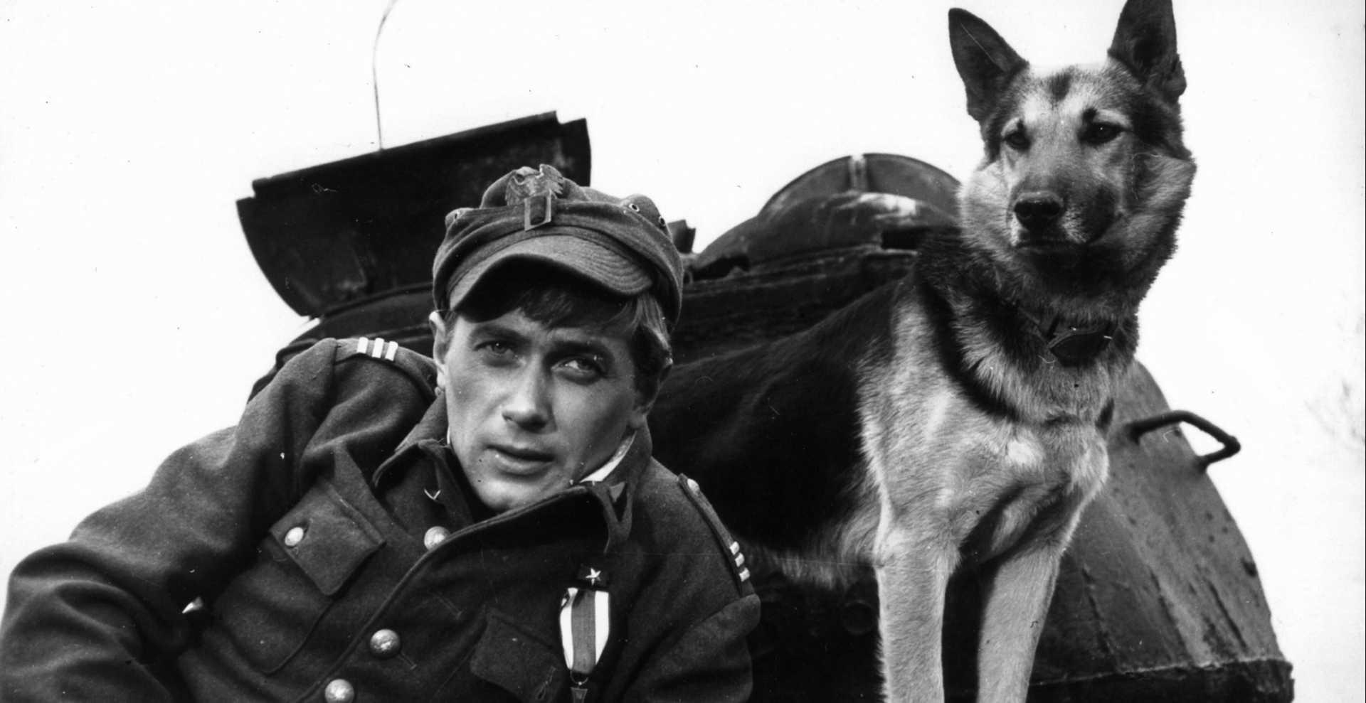 Четыре танкиста и собака фотографии
