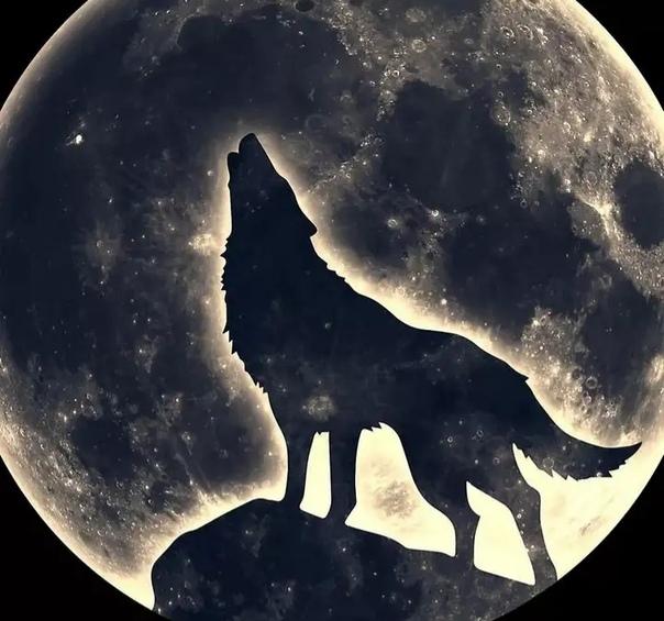 волк на фоне луны в картинках