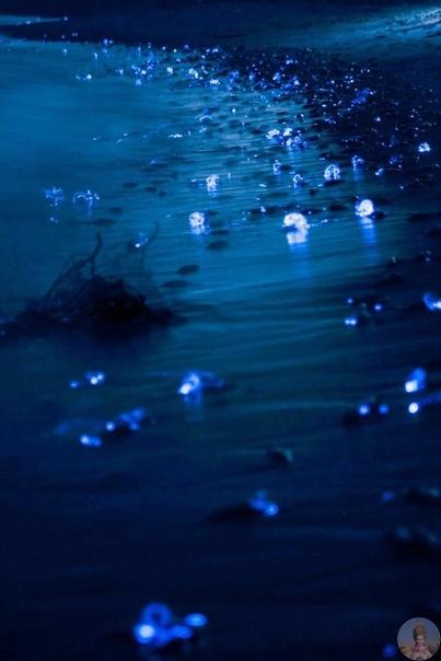Скопища маленьких кальмаров в заливе Тояма, Япония