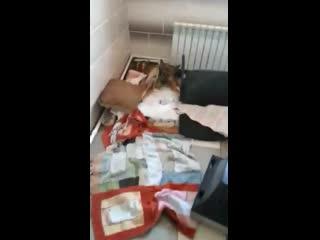 В Перми разгромили станцию скорой помощи для животных Антидогхантер. Видео