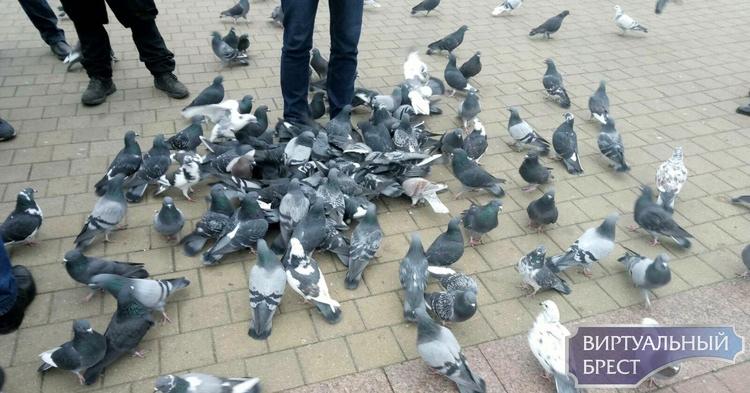 Инициативная группа согласна помочь в очистке площади от помёта голубей. Приглашают всех и персонально Цапкова