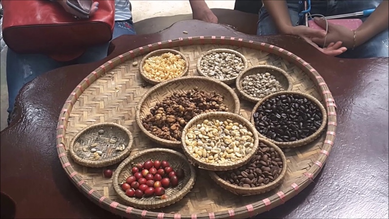 Кофе Лювак и пальмовая куница Арабика Робуста Кули лучший Вьетнамский кофе из какашек