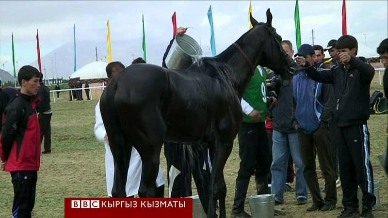 Сапар: Түркмөн Ахал-Теке тулпары - BBC Kyrgyz