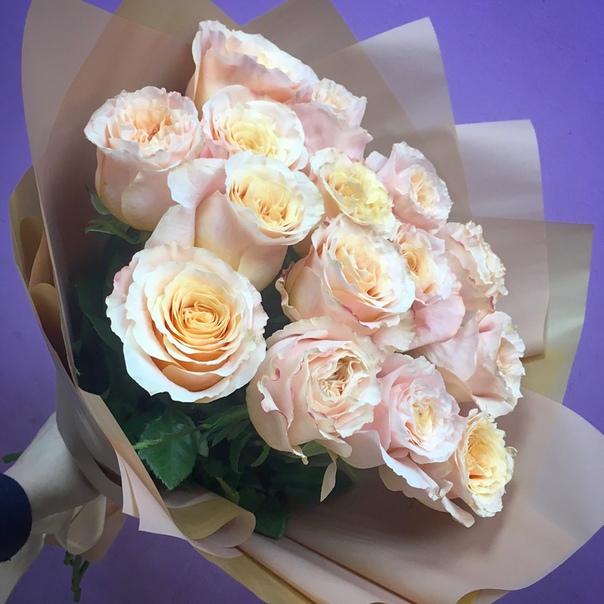 защита сотрудников поздравление от донны розы подойдут для прогулок