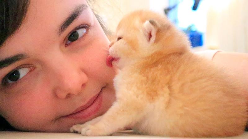 Tiny kitten kisses me Relax ASMR Too CUTE