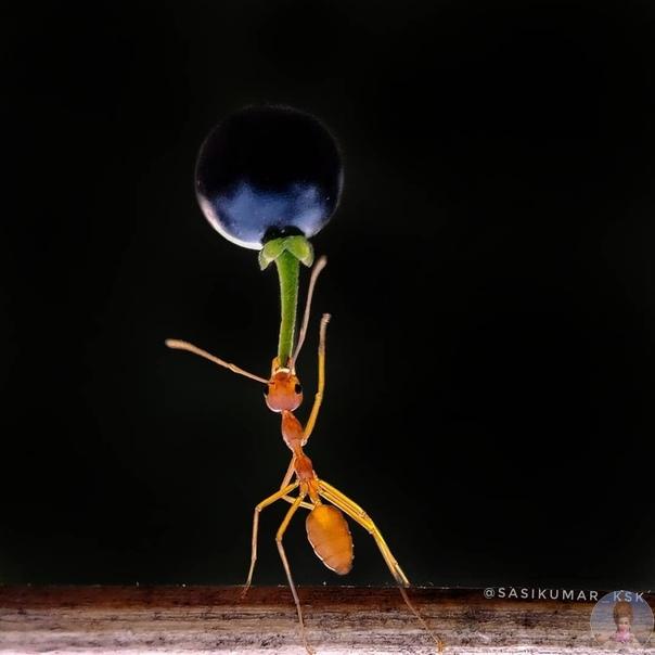 Портреты насекомых Саси Кумара.