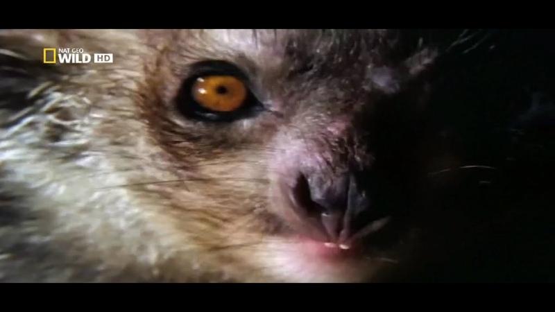 Мадагаскар затерянный мир Документальный фильм Wild A World Apart HD